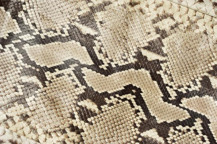 Reptile skin textures (63) (700x466, 290Kb)