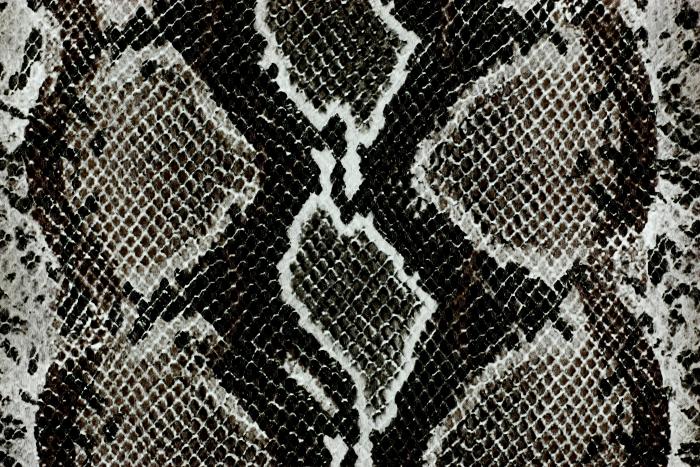Reptile skin textures (65) (700x467, 567Kb)