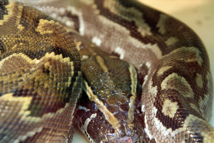 Reptile skin textures (71) (700x467, 438Kb)