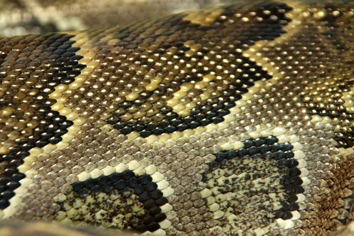 Reptile skin textures (77) (700x467, 517Kb)