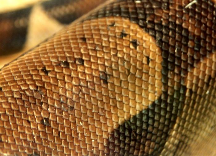 Reptile skin textures (81) (700x506, 472Kb)