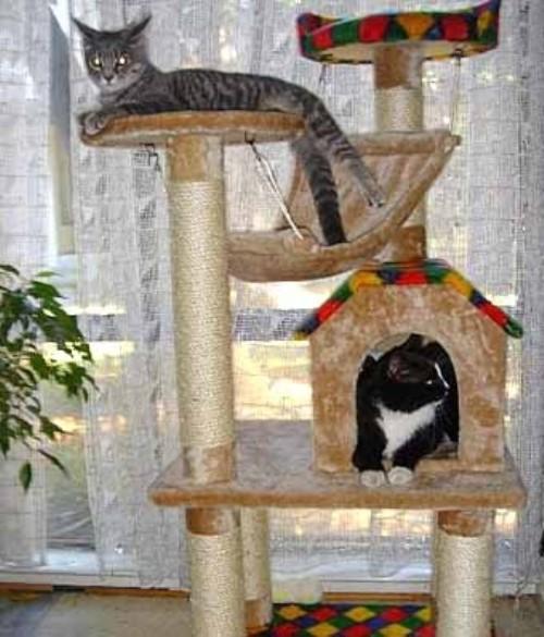 что разновидностей кошачьи домики своими руками того