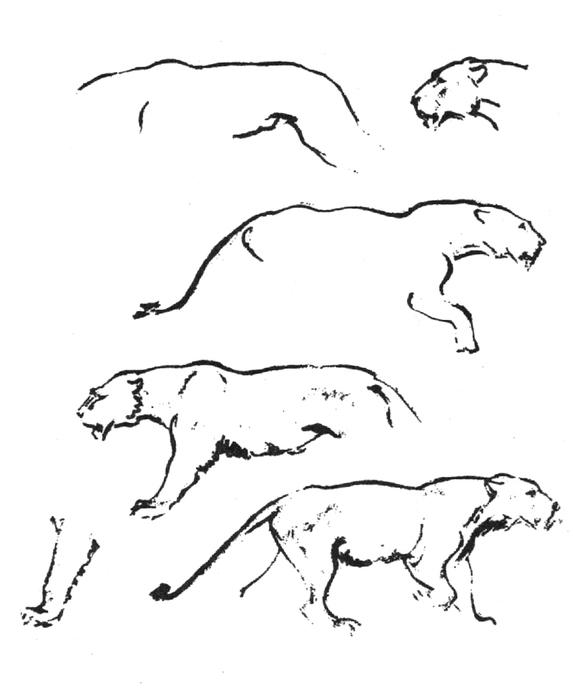 Лошади рисунки карандашом поэтапно для начинающих