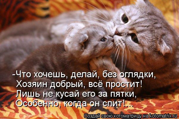 kotomatritsa_0A (604x402, 60Kb)