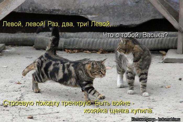 kotomatritsa_5 (700x465, 68Kb)