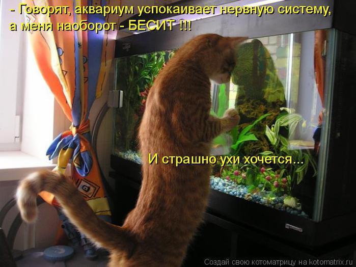 kotomatritsa_Fp (700x524, 58Kb)
