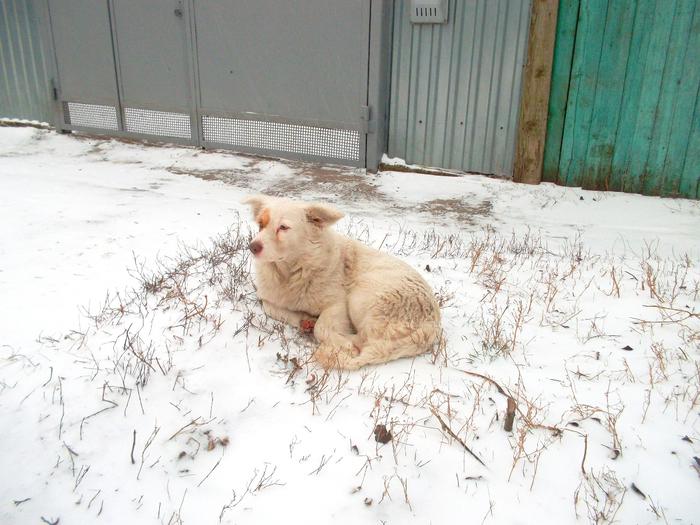 1 зима 2012,зимнии фотографии,белый (700x525, 470Kb)