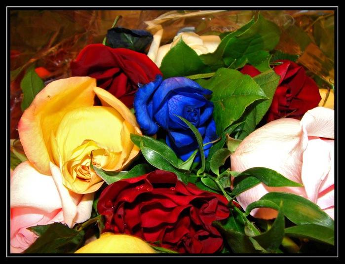 розы-разные (700x535, 115Kb)