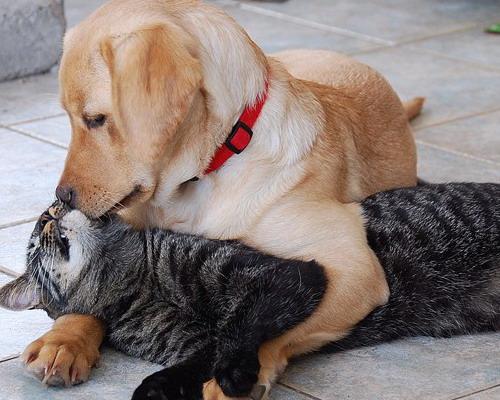 кошки и собаки2 (500x400, 77Kb)