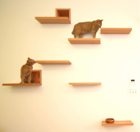 House_Cat_03 (468x440, 32Kb)