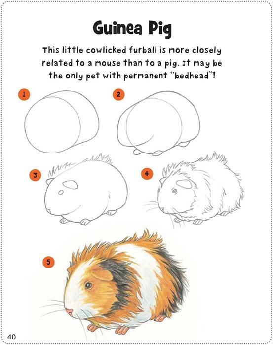 Рисуем морских свинок поэтапно