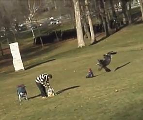 Беркут крадёт ребёнка (295x249, 24Kb)