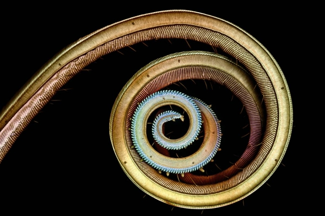 макрофото Olympus BioScapes Imaging Competition 2012 12 (640x426, 166Kb)