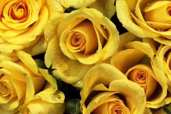 yellow_gallery__600x400 (600x400, 56Kb)