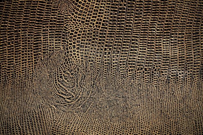 snakeskin_texture_by_beckas (700x466, 421Kb)