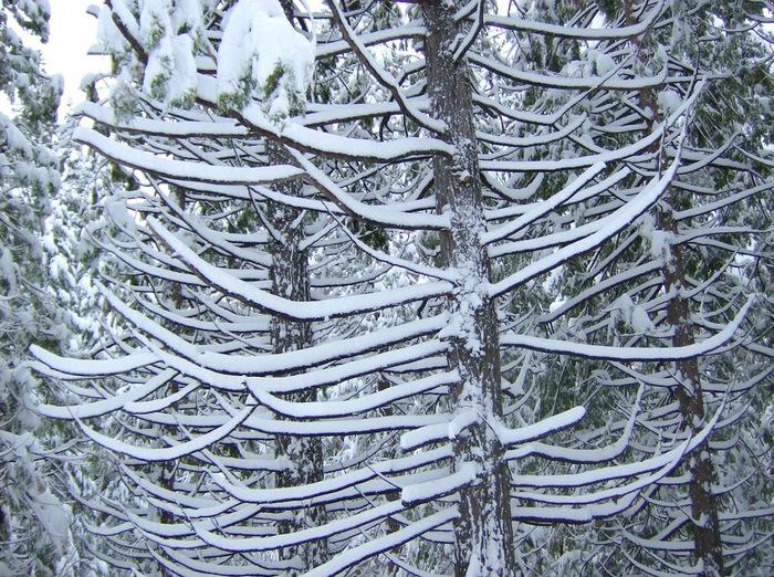 Ах, зима, зима... 62430