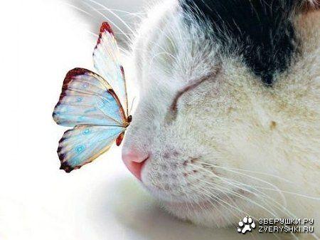 бабочко-кошачье (450x337, 27Kb)