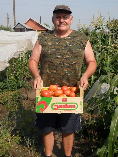 зависимости цели, к чему снится собирать неспелую помидору белье