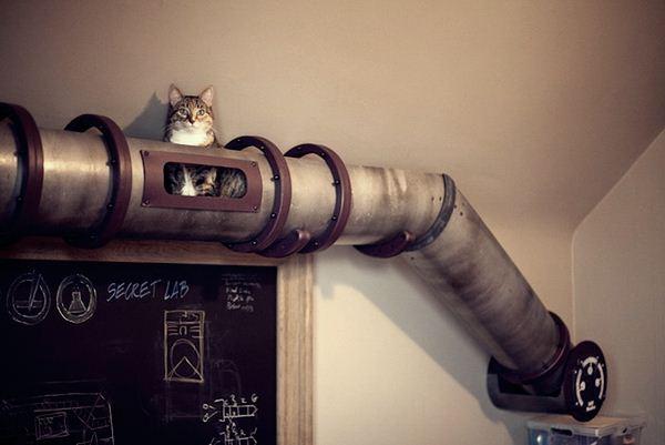 Кошачий трубопровод