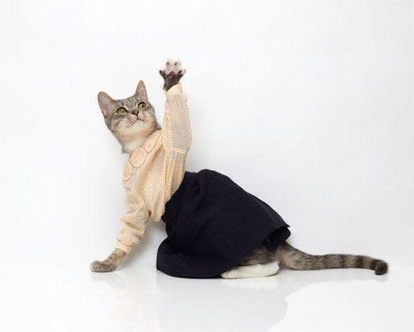 Платье своими руками для кошек