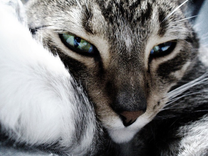 грустный кот фото/4171694_kak_poborot_plohoe_nastroenie /3185107_kak_poborot_gryst (700x525, 129Kb)