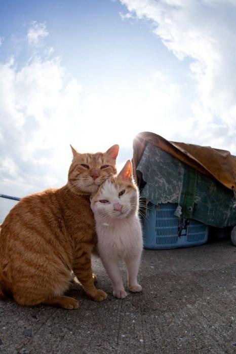 смешные кошки фото 1 (466x700, 194Kb)