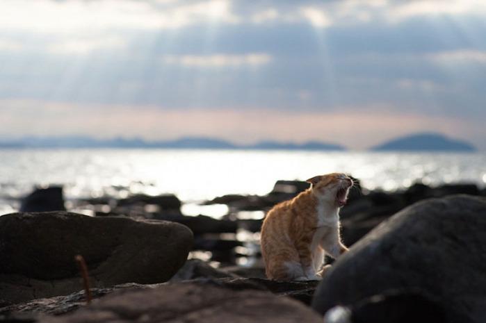 смешные кошки фото 3 (700x465, 59Kb)