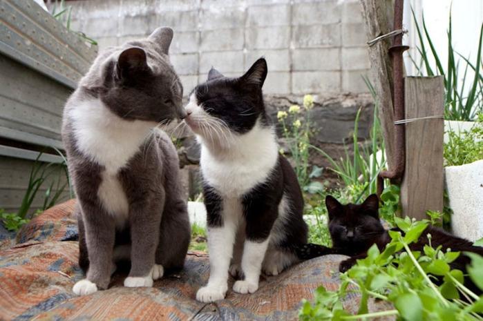 смешные кошки фото 7 (700x465, 122Kb)