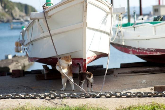 смешные кошки фото 9 (700x465, 102Kb)