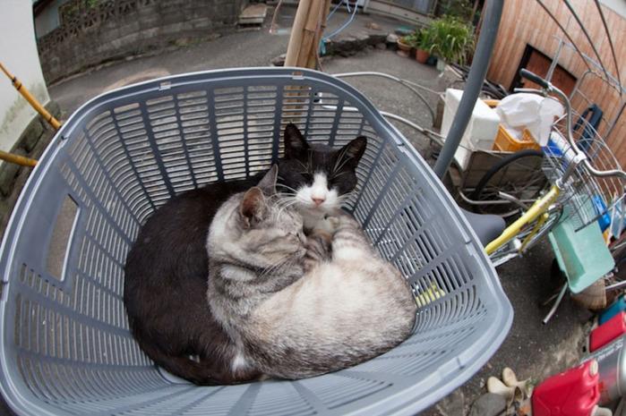 смешные кошки фото 12 (700x465, 135Kb)