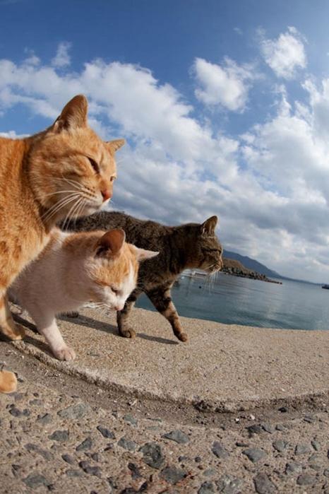 смешные кошки фото 16 (466x700, 234Kb)