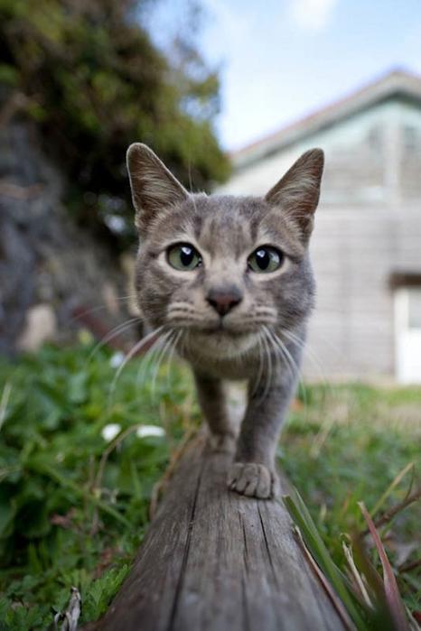 смешные кошки фото 18 (466x700, 184Kb)