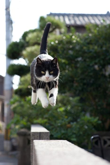 смешные кошки фото 21 (466x700, 165Kb)