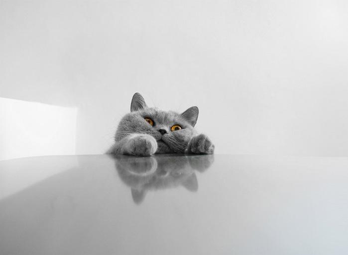 прикольные фото кошек 4 (700x513, 34Kb)