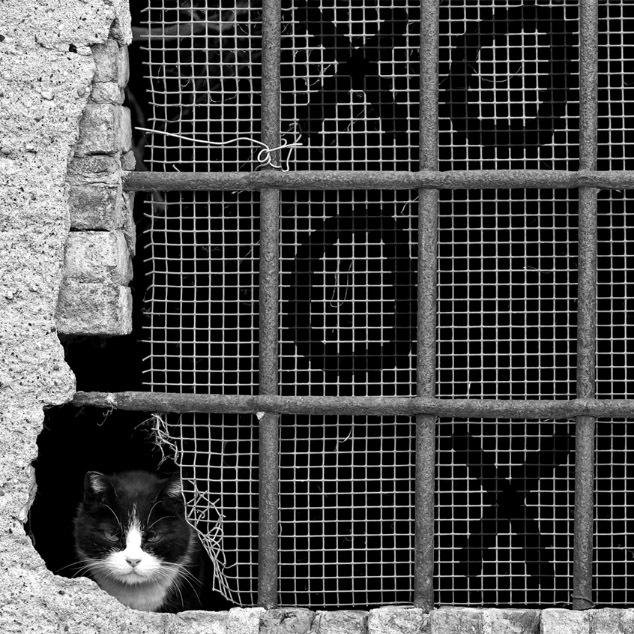 прикольные фото кошек 9 (634x634, 179Kb)