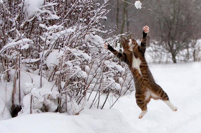 прикольные фото кошек 11 (700x464, 168Kb)
