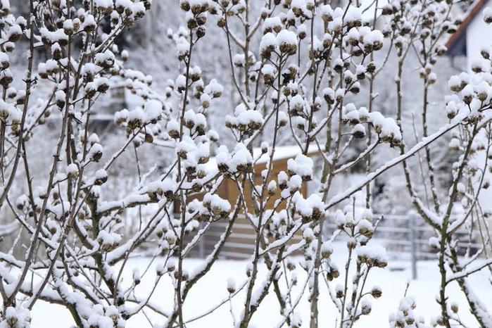 Ах, зима, зима... 24084