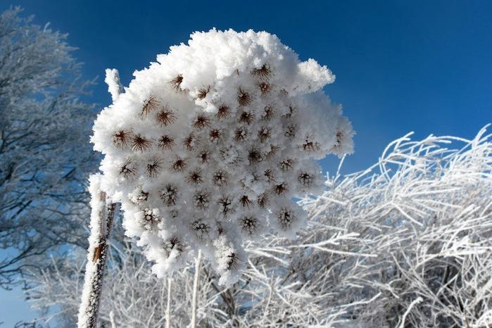 Ах, зима, зима... 81497