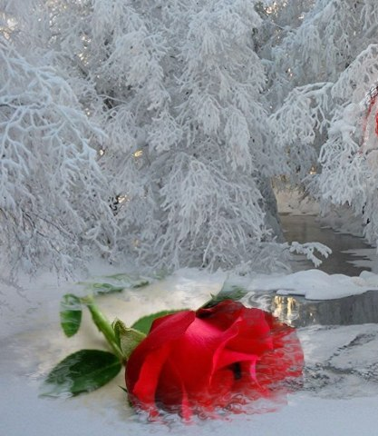 зима.любовь (417x480, 52Kb)