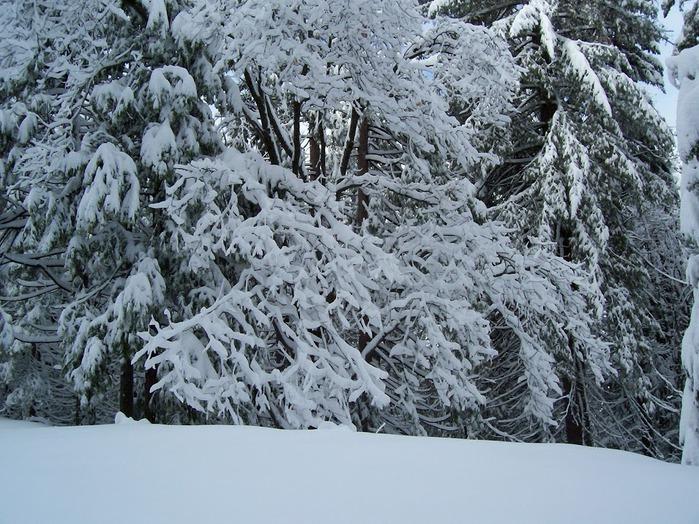 Ах, зима, зима... 52729