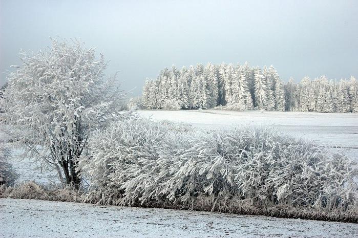 Ах, зима, зима... 62037