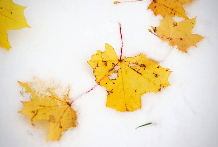 Ах, зима, зима... 79405