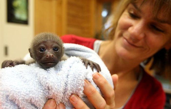 смешная обезьянка фото 1 (700x449, 37Kb)