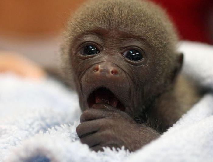 смешная обезьянка фото 3 (700x535, 35Kb)