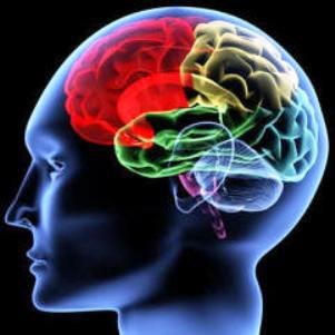 Мозг человека - способность видеть звук (301x301, 14Kb)