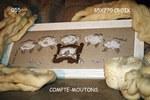 ������ Compte-mouton 1 (420x280, 34Kb)