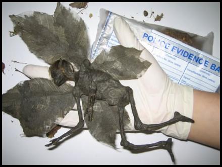 Необычное крылатое существо в Мексике (440x332, 41Kb)
