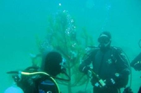 елка под водой (456x300, 26Kb)