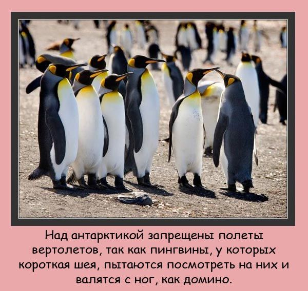 fakti_07 (600x568, 99Kb)