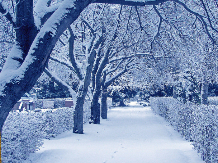 5_winter_foto (700x525, 335Kb)